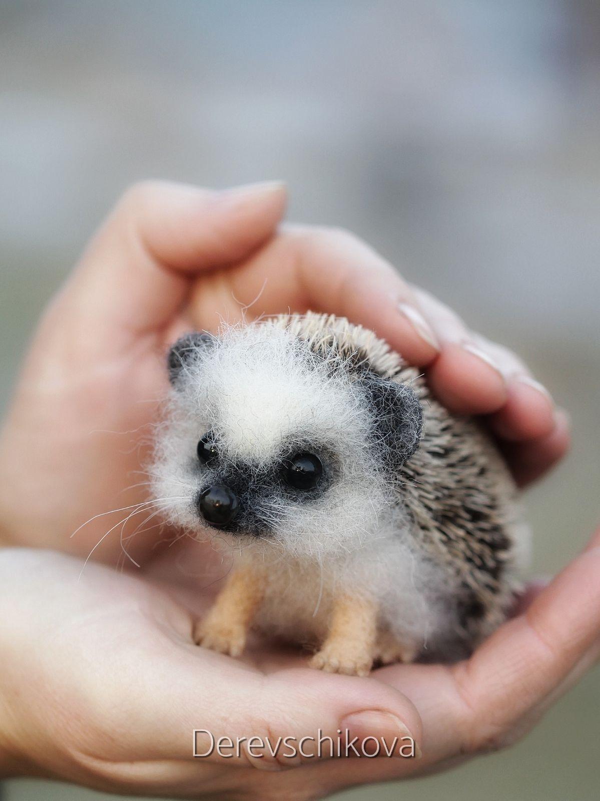 Immagine Cuccioli di animale di Addison Tate su Funny