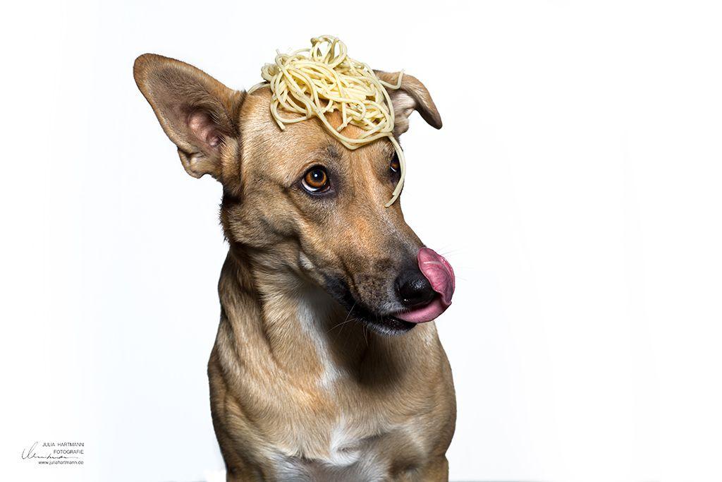 Essen Verbindet Bella Luna Hund Im Studio Hund Portraits Tierfotografie Fotografie Workshop