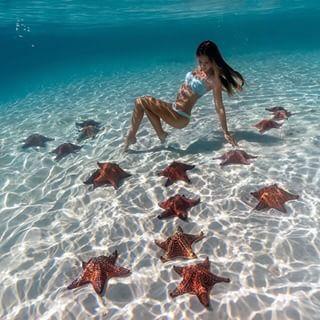 Starfish Garden - The Bahamas