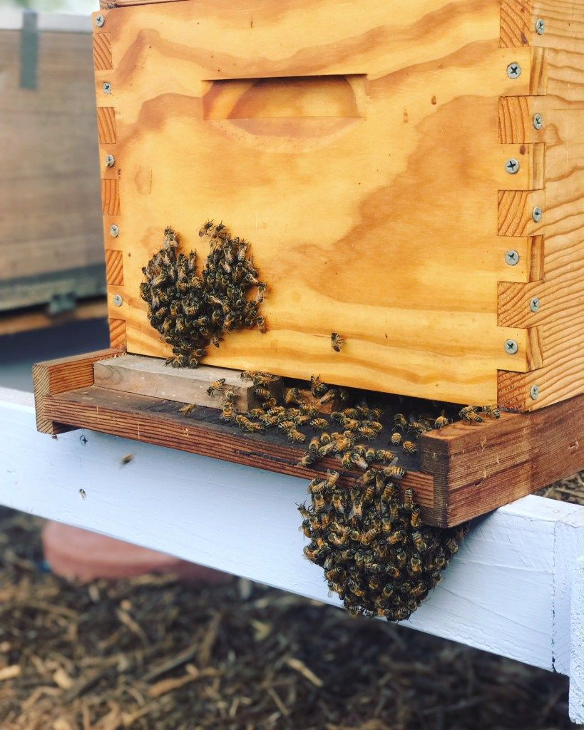 HOW TO HELP BEES IN HOT WEATHER Keeping Backyard Bees ...