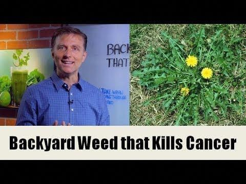 A Backyard Weed the Potential to Kill Cancer Cells (Dandelion)
