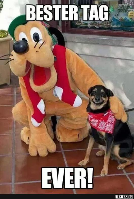 Photo of ¡El mejor día! El   Fotos graciosas, refranes, chistes, muy graciosos