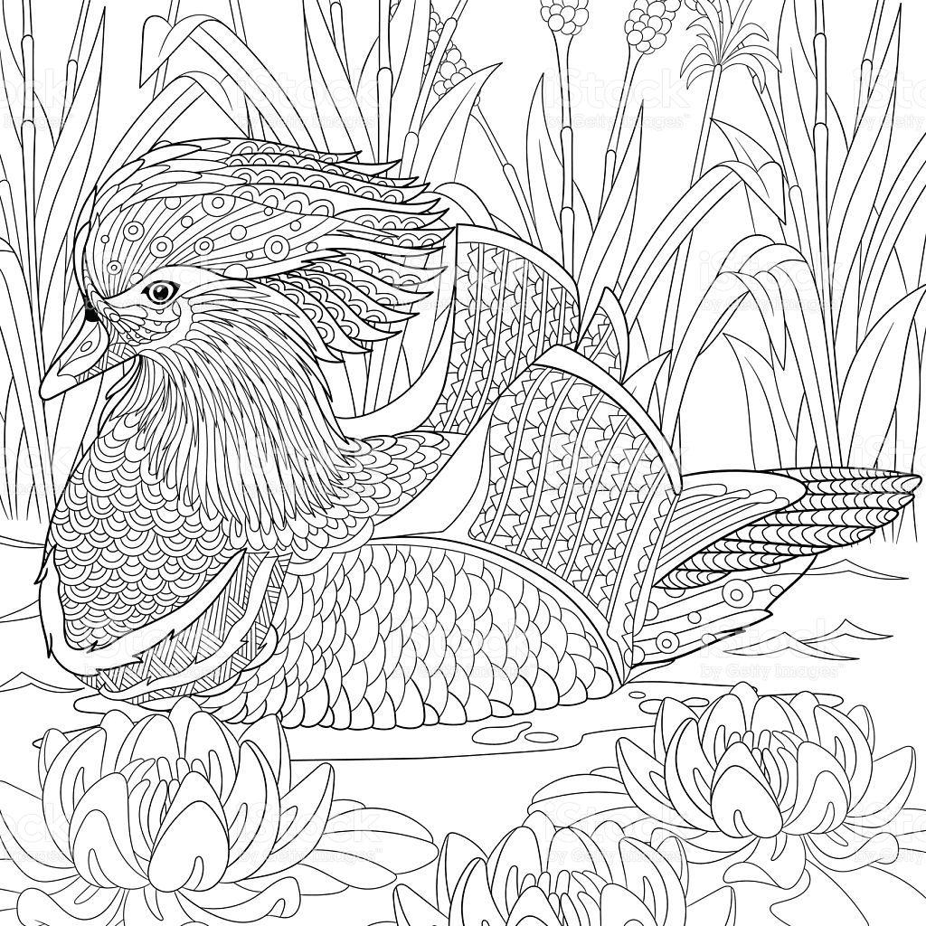 Hand Drawn Stylized Cartoon Mandarin Duck Swimming Among Water Lilies Vogel Malvorlagen Malbuch Vorlagen Ausmalbilder