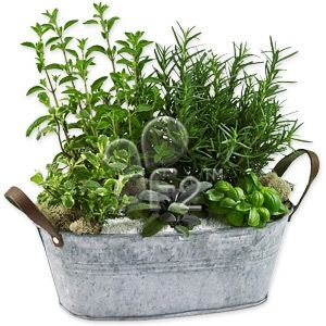 Love container gardening Herbs don t mind crowding so stick them in all sorts