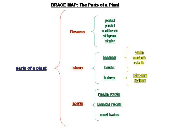 Brace map whole part relationship thinking with for Brace map template