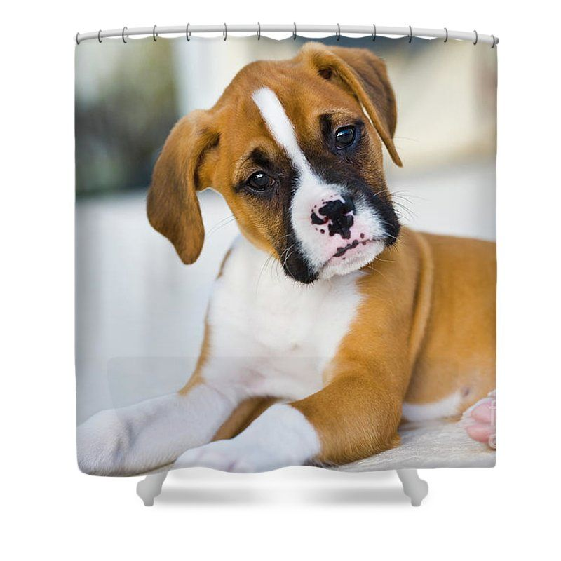 Puppy Shower Curtain For Sale By Juan Silva In 2020 Boxer Dogs