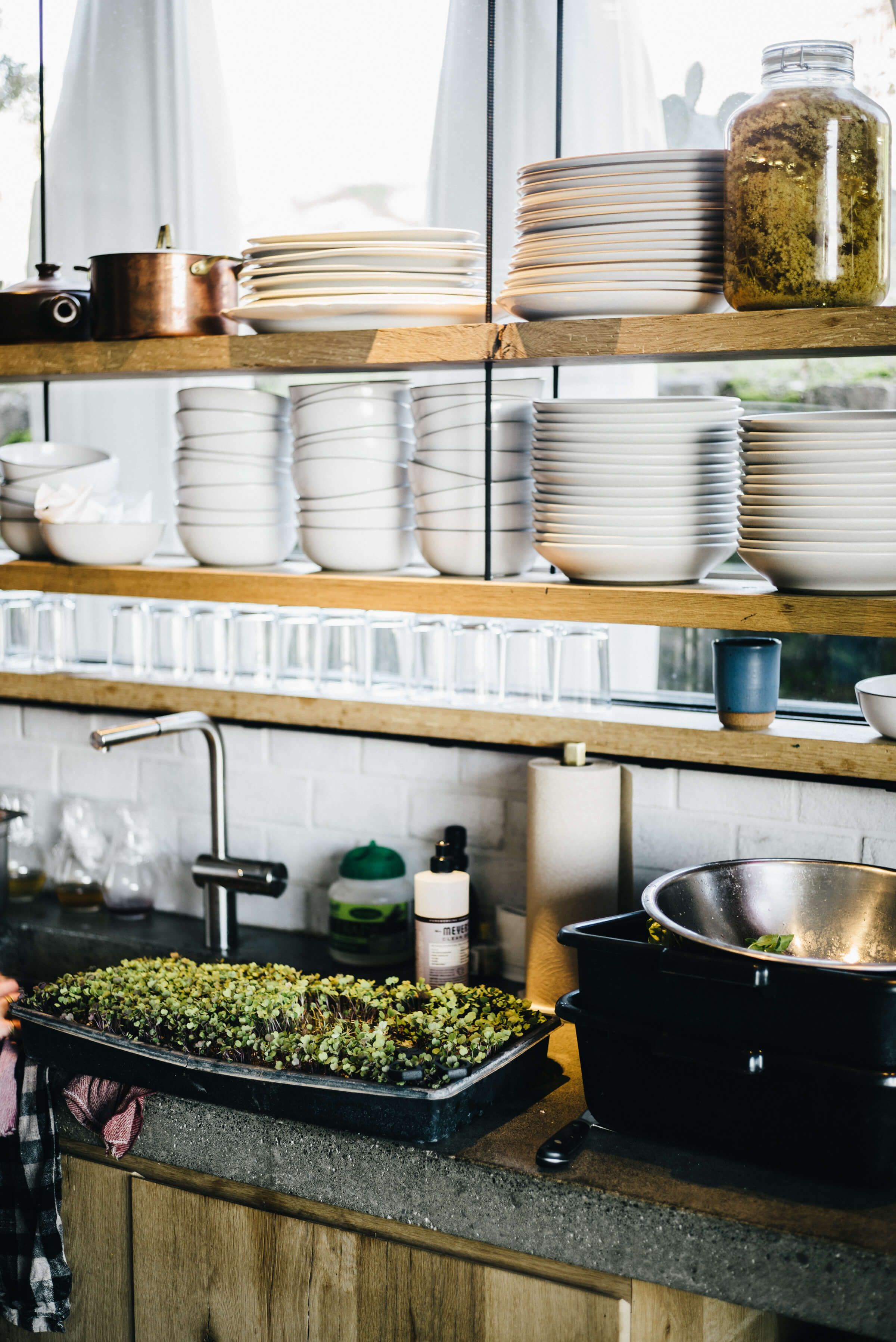 Scribe Winery in Sonoma   Haciendas