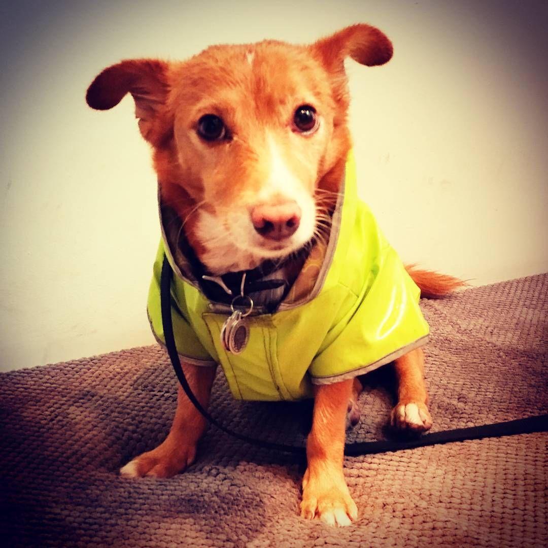 Rain, rain, go away... #dogsofinstagram #dogsoffishtown #dogsofphilly #rescuedogsofinstagram #philly #phila #adoptnotshop #adoptdontshop #fishtown #philadelphia
