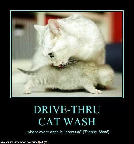 Drive-Thru Cat Wash