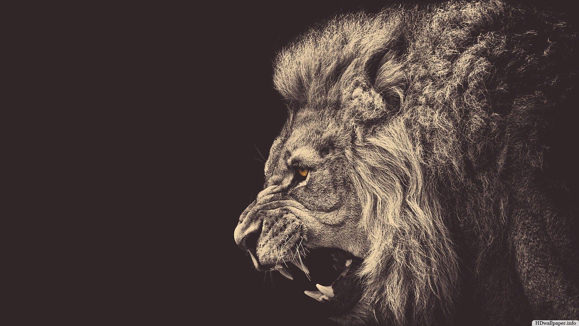 Roaring lion hd wallpaper desktop http hdwallpaper for Immagini leone hd