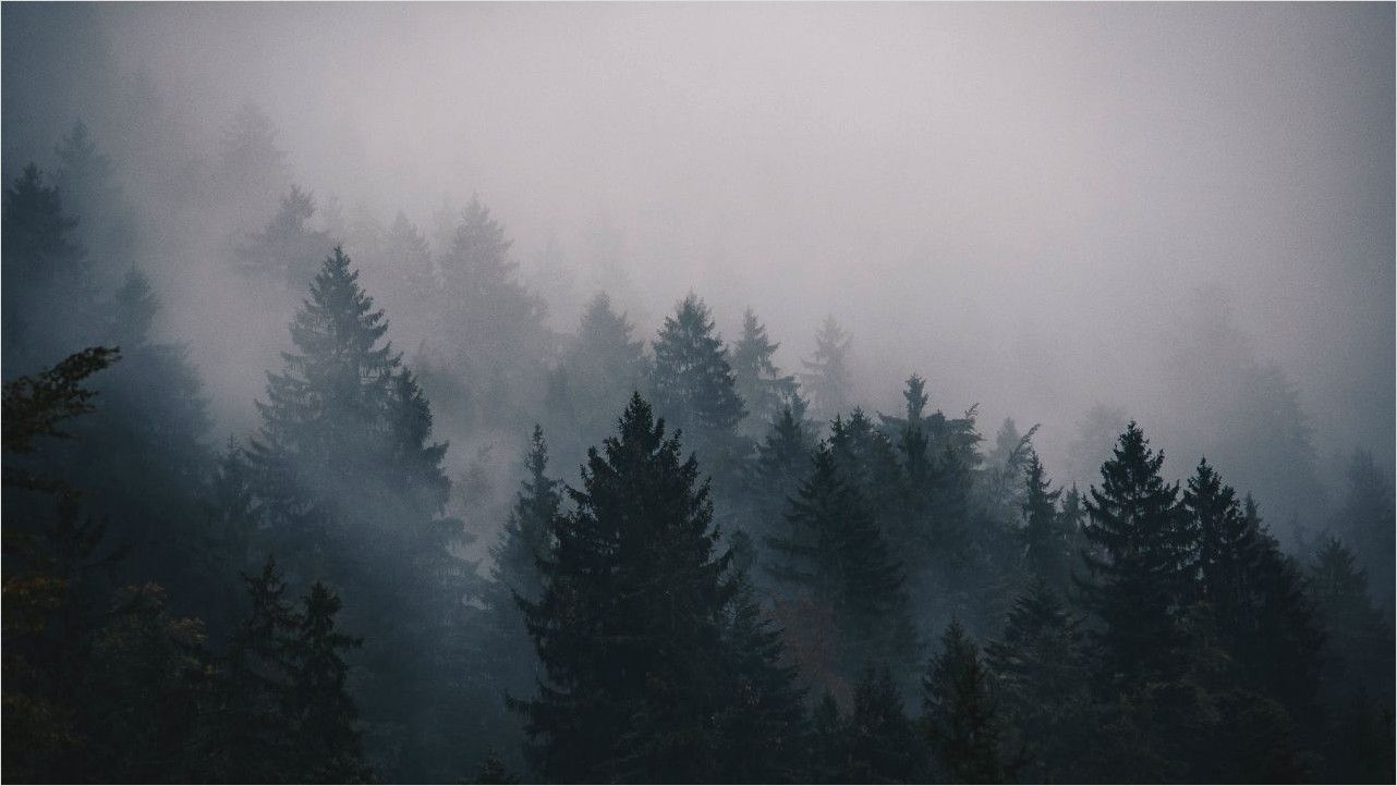 4k Apocalypse Forest Wallpaper In 2020 Forest Wallpaper Foggy Forest Nature Hd
