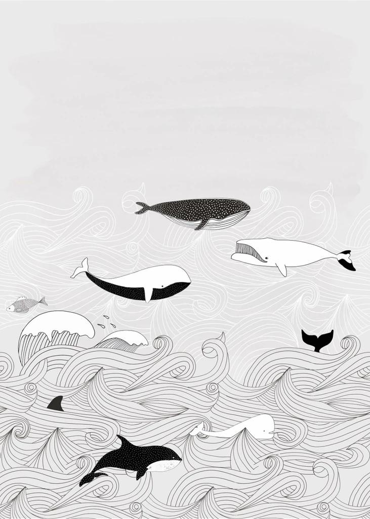 Claas Wild Whales Wallpaper Australia Wallpaper Mural