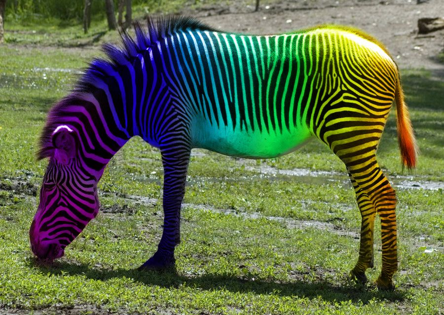 Oh, How you tease. I wish rainbow zebras were