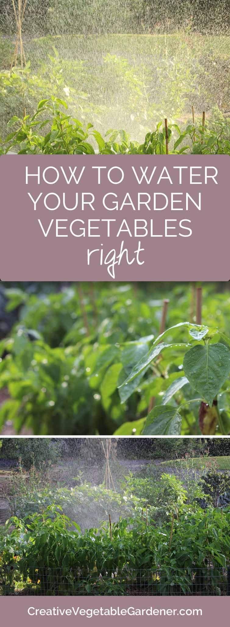how to water your vegetable garden in summer vegetable garden