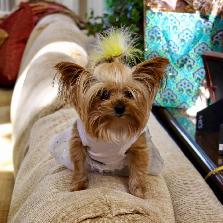 Bow Wow Cutest Dog Contest Dog Photo Contest Cute Dogs Cute