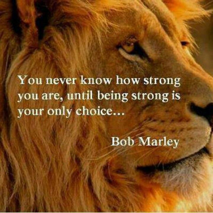 Heart Of A Lion Family Quotes Quotes Inspirational Quotes Bob