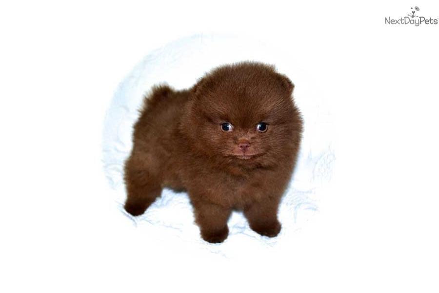 Good name. Koko