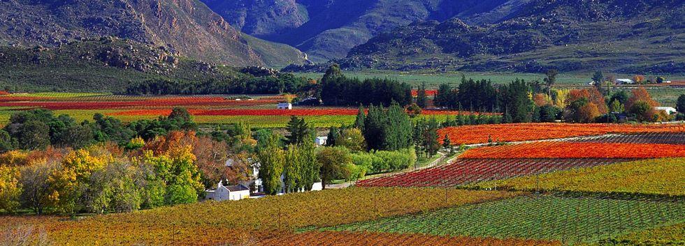 Cape Winelands Scenic wine farms in the Cape Train