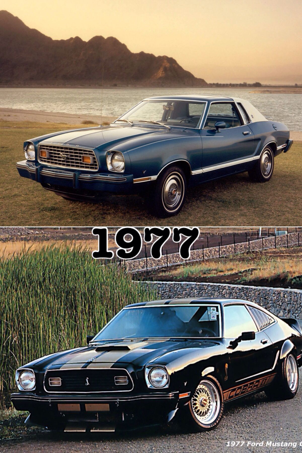 1977 mustang ii ghia with sport group ford mustangs pinterest ford contour ford and cars