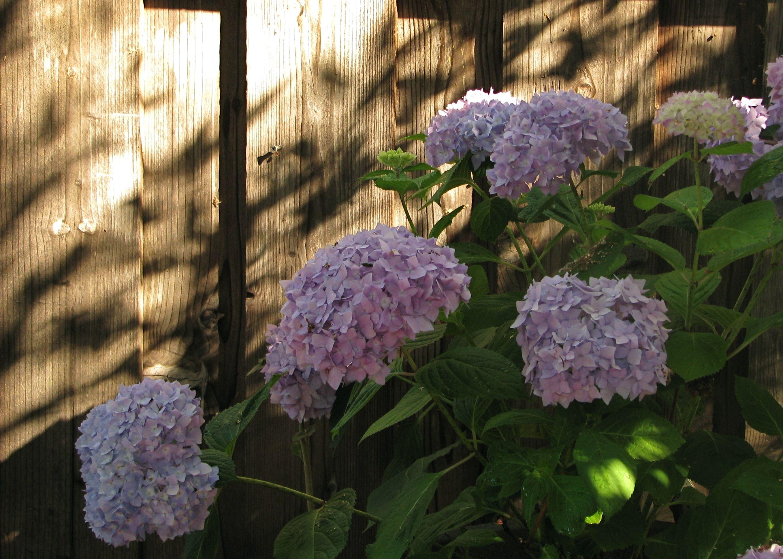 Love summer evening shadows plants and fungi pinterest summer