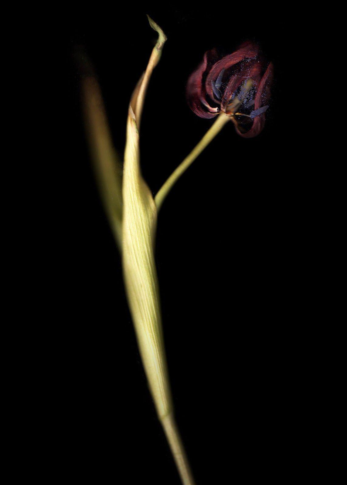 Imogen Emily Photography: November 2012