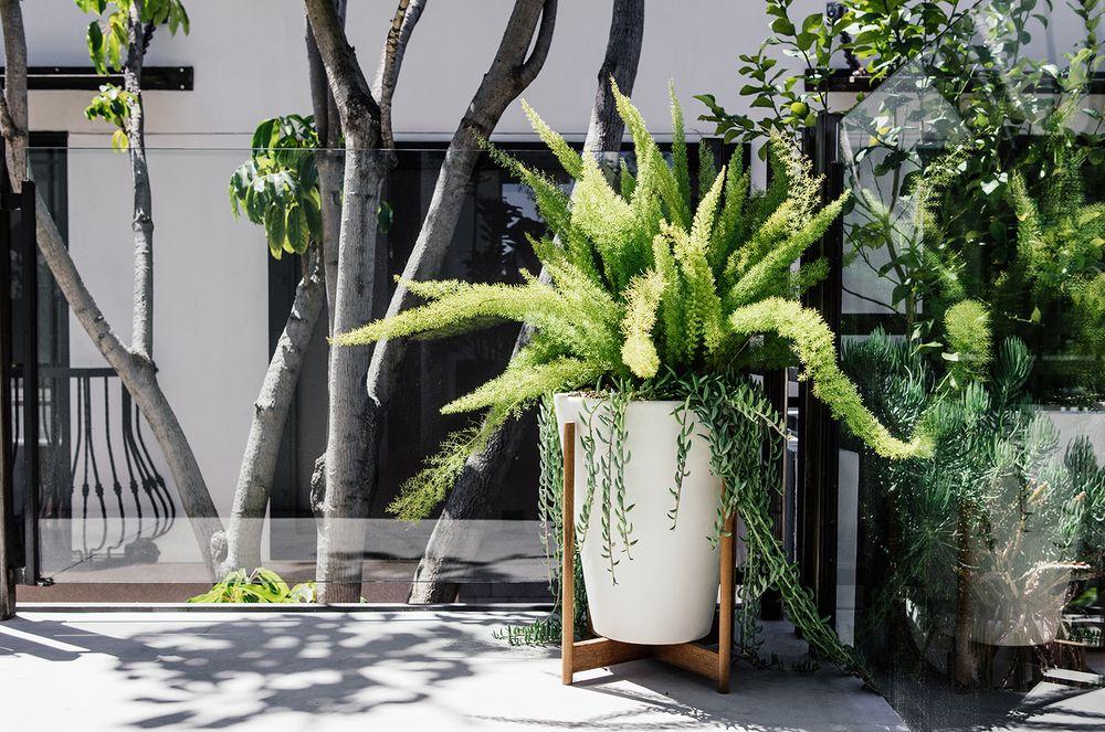 36 Hours in LA Egg canvas, Indoor plants, House landscape