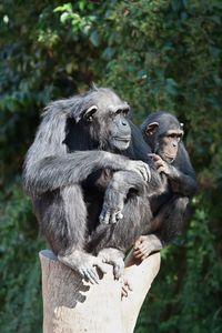 Jane Goodall Institute South Africa - Chimpanzee Eden ...