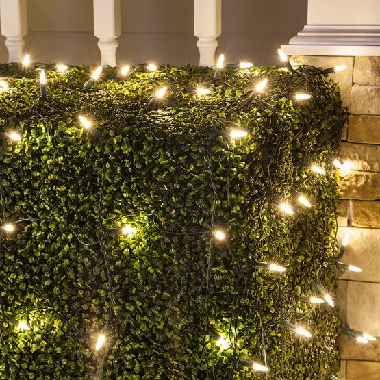 M5 4 X6 Warm White Led Net Lights Green Wire