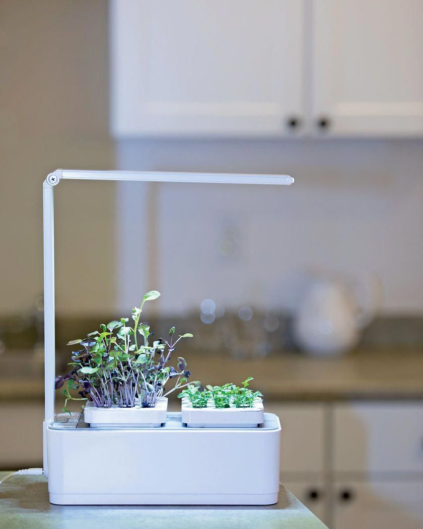 Microgreens Small Hydroponic Planter Led Lights Gardeners