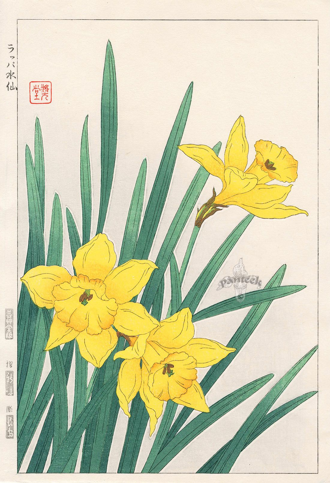 Daffodil From Shodo Kawarazaki Spring Flower Japanese Woodblock Prints Art Drawings Beautiful Japanese Woodblock Printing Blossoms Art