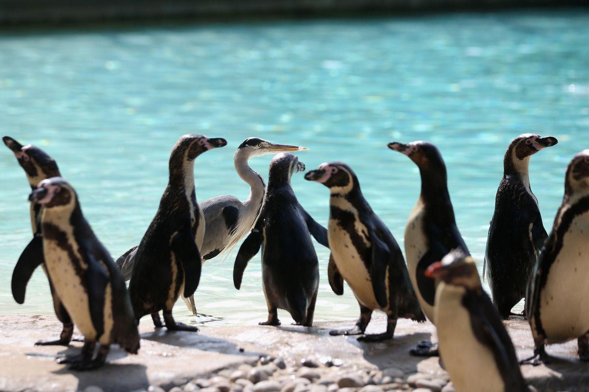 Huffington Post Animals London Zoo Pets