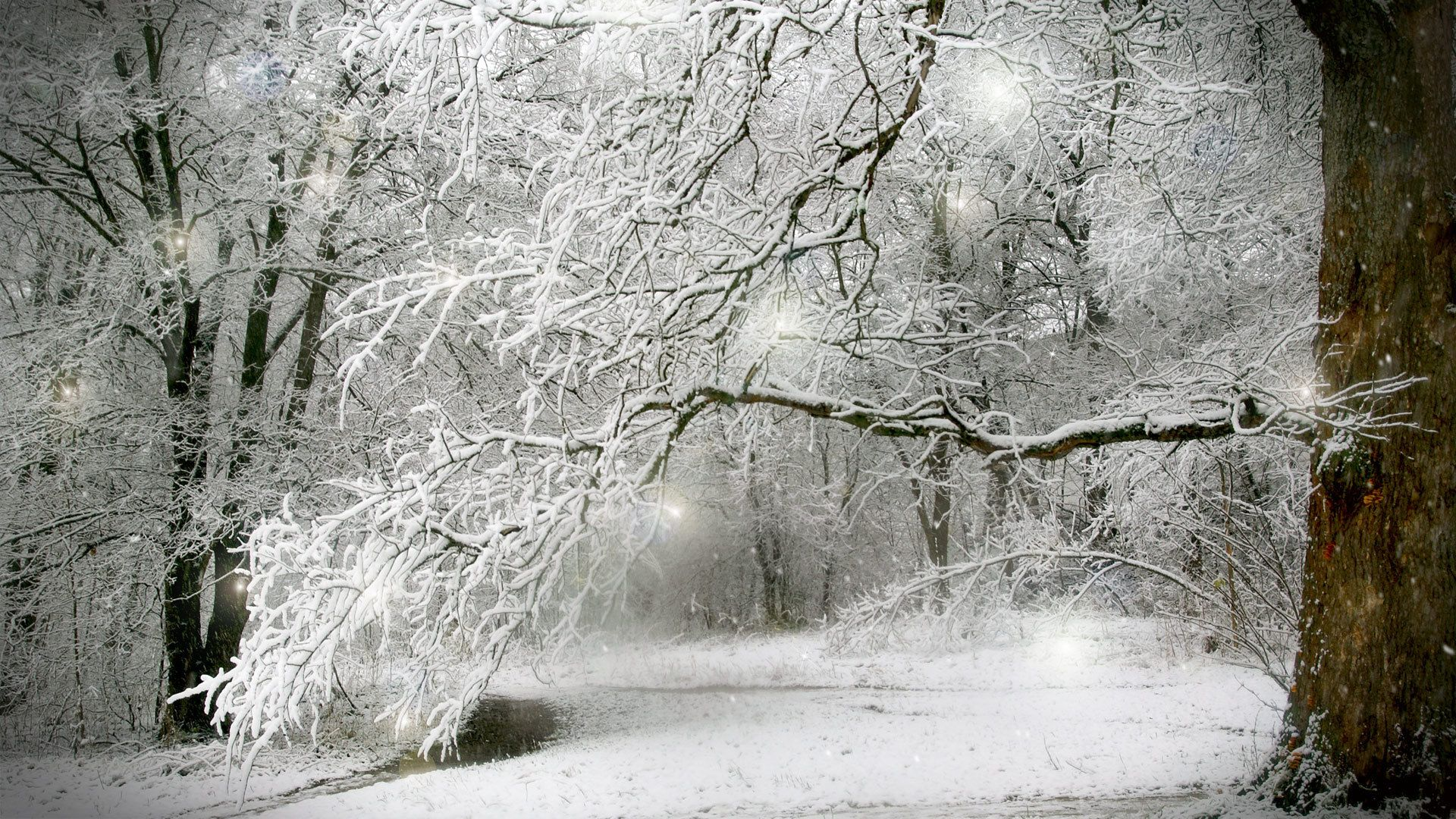 images of winter forest scenes scenes of winter Desktop