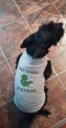 Squirrel patrol...