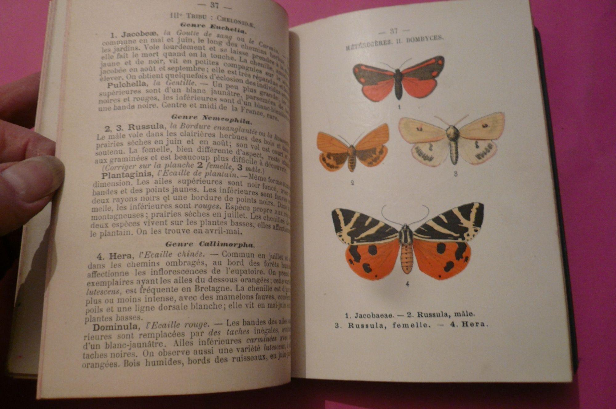 Atlas de poche des papillons de France, Suisse et Belgique - Paul Girod