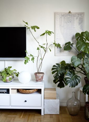 Bring Your Living Room To Life With Indoor Plants Of All Shapes And Sizes Ikeaideas Wohnzimmer Pflanzen Wohnzimmerdekoration Wohnzimmer Inspiration