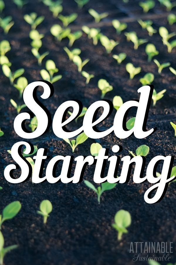 Growing Vegetables from Seeds How to Get a Jump on Your Garden If youre planting a garden decide if youre planting seeds or seedlings Heres what to know about seed germin...
