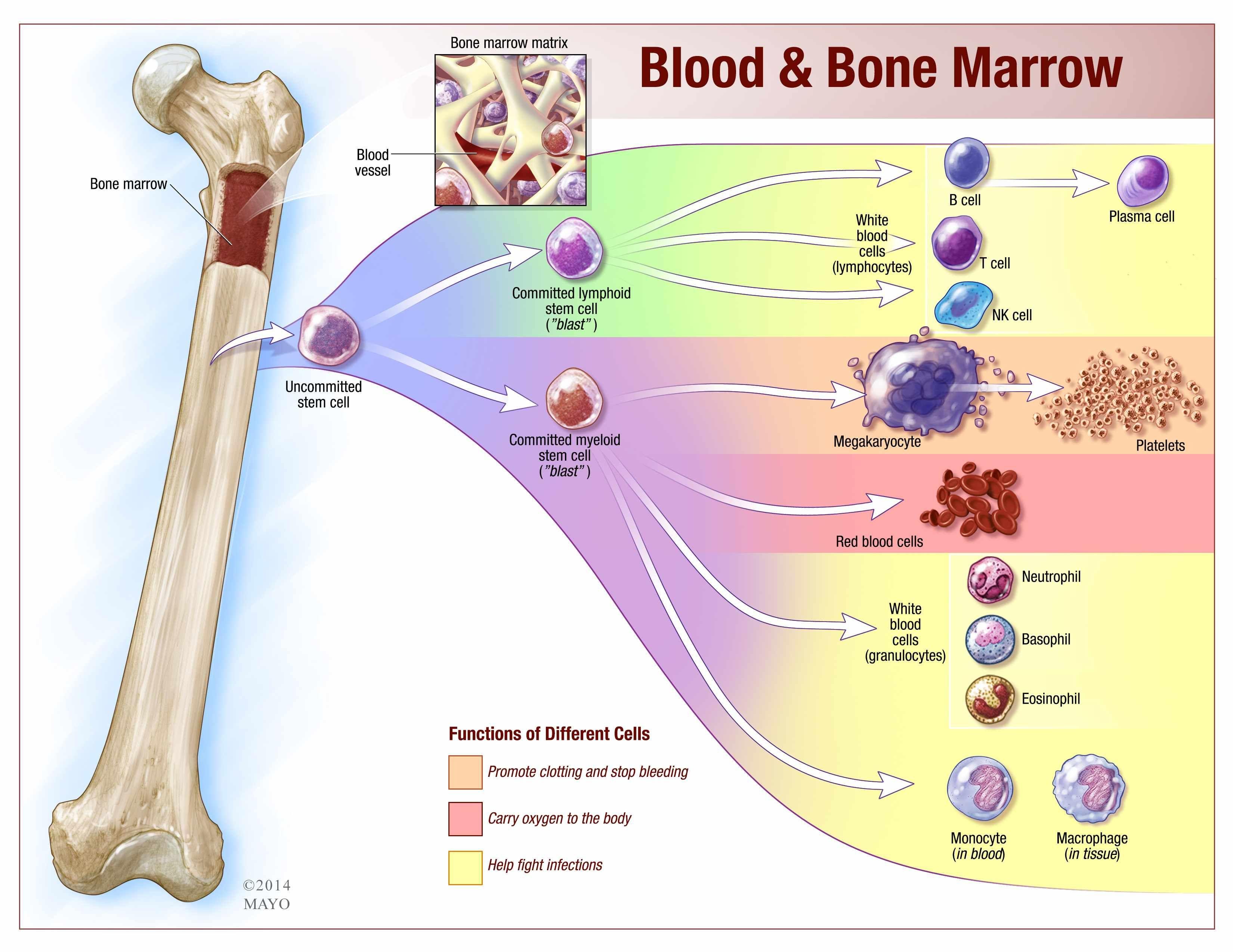 83 Graphs Blood And Bones