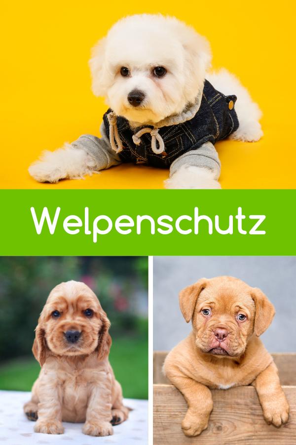 Welpenschutz Ein Grosser Mythos In Der Hundewelt Welpen Hunde Und Welpenschutz