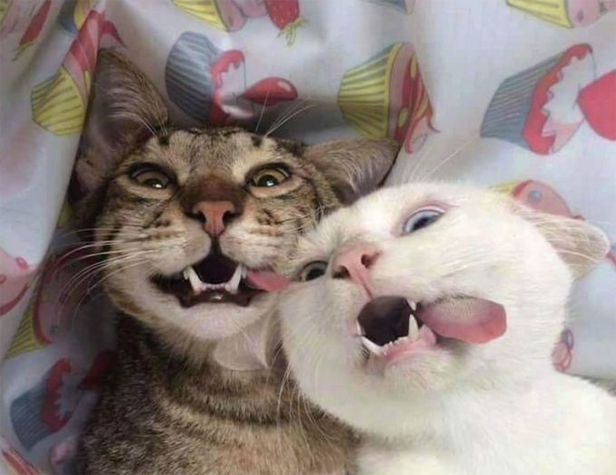 30 Happy Smiling Cats For Happy Cat Month Picture Gallery With