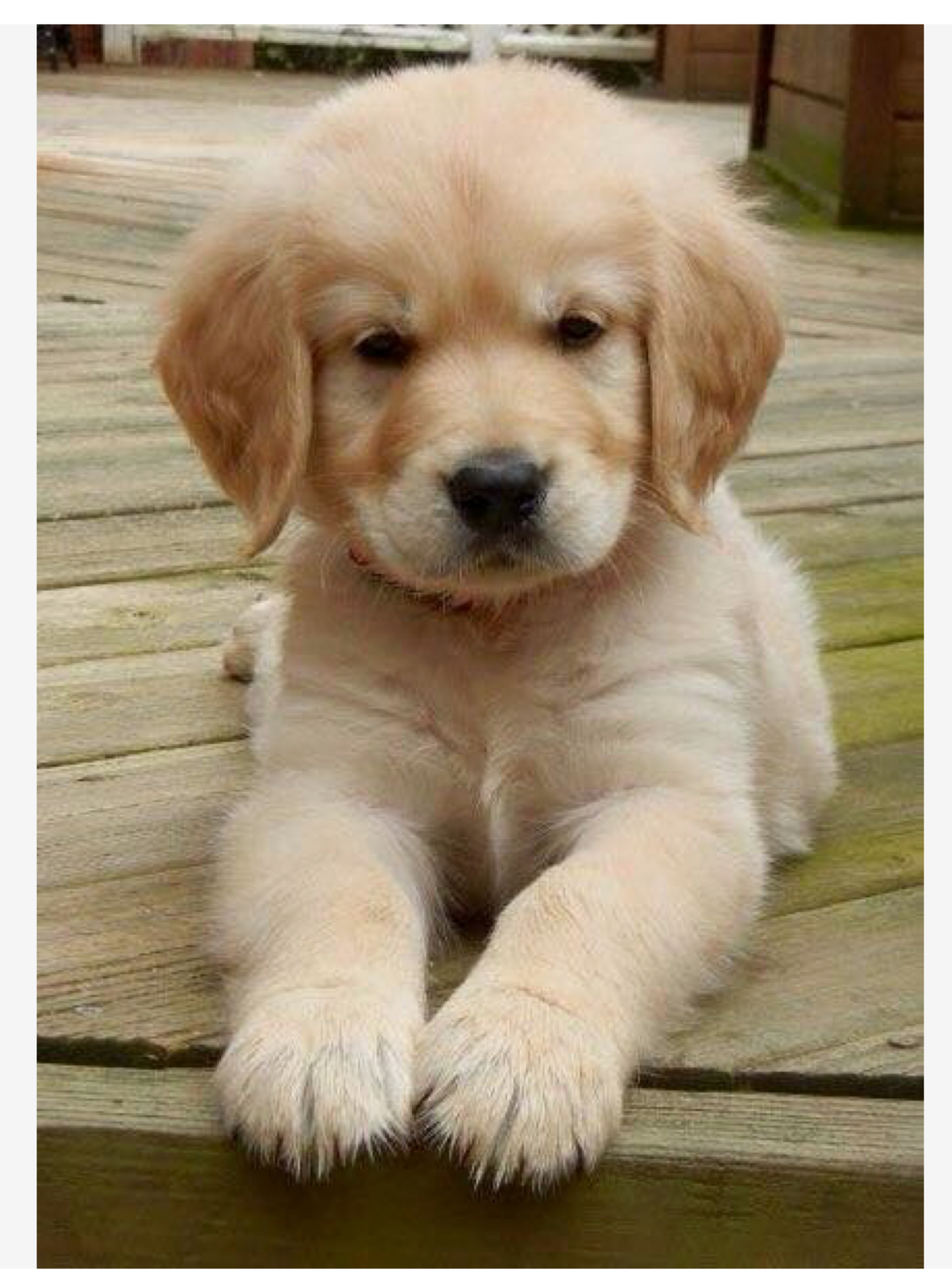Pin By Jill Zipperer On Dogs Animals Cute Baby Animals Baby Animals Cute Dogs