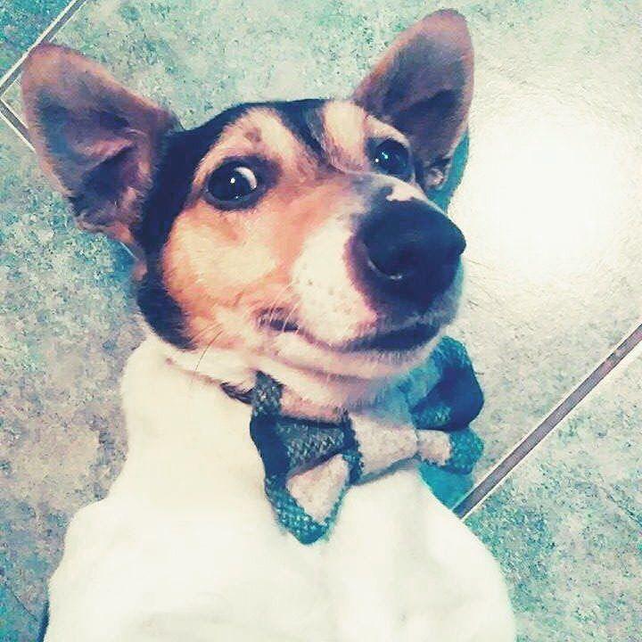 Ahooooj  Mr. Kubko na nedeľu odporúča úsmev a pohodu s motýlikom  aké máte plány vy? #MotýlikPrePsa #PomocPsíkom 30% z predaja pre útulky www.psimotylek.cz #dogbowtie #smile #dog #happy http://bit.ly/funky_dog_bow_ties by funky_dog_bow_ties