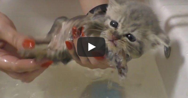 Rescued Baby Kitten Gets Much Needed Bath Baby Kittens Sugar Glider Kittens