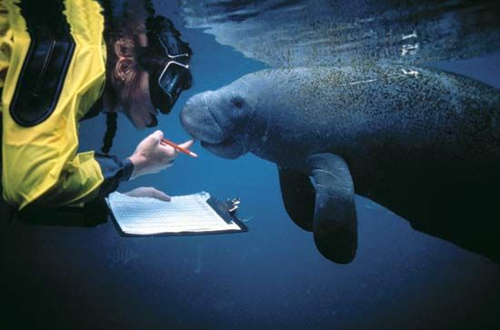Zoologist  Google Search  Animals    Zoology Manatee