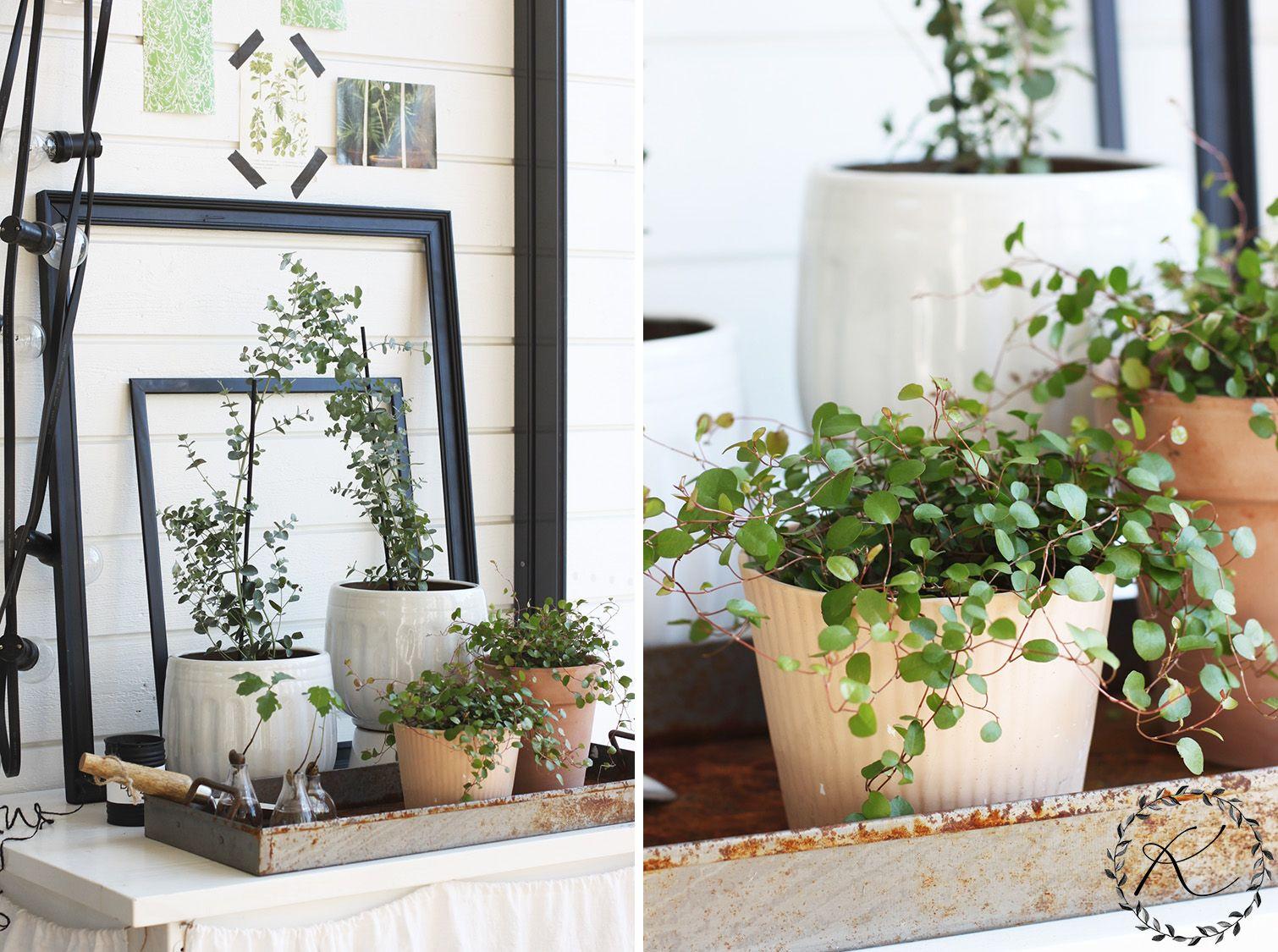 15x Eucalyptus Huis : Terassin uudella pöydällä vihertää kukkala flowers plants garden