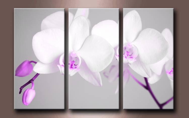 2561951 f cuadro triptico flores blancas cuadros flores - Cuadros tripticos ...