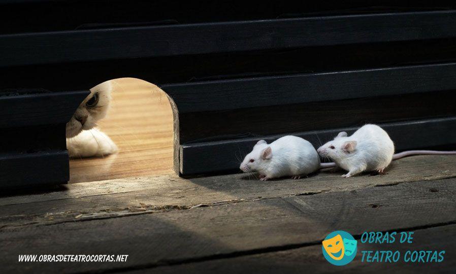 El Gato Y El Raton Obras De Teatro Cortas Humor Divertido Sobre Animales Imágenes Divertidas De Animales Gatos