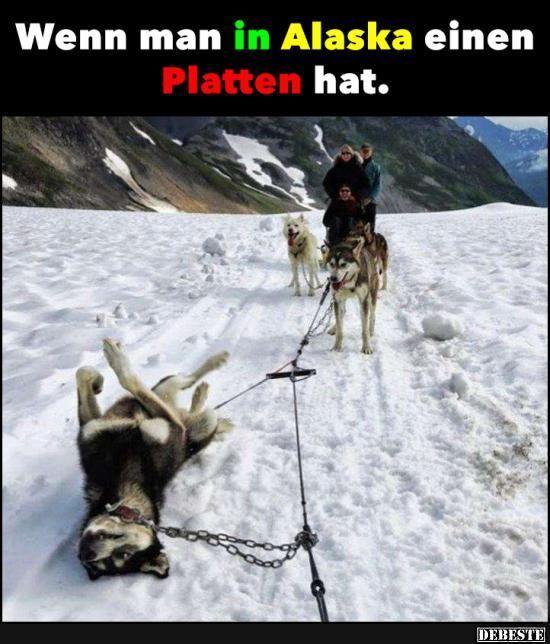 Wenn Man In Alaska Einen Platten Hat Lustige Bilder Von Tieren