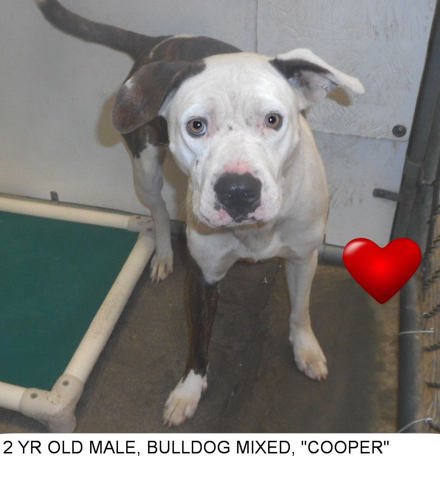 Cooper To Be Killed 7 8 17 Located In Elizabethtown Nc Has 1