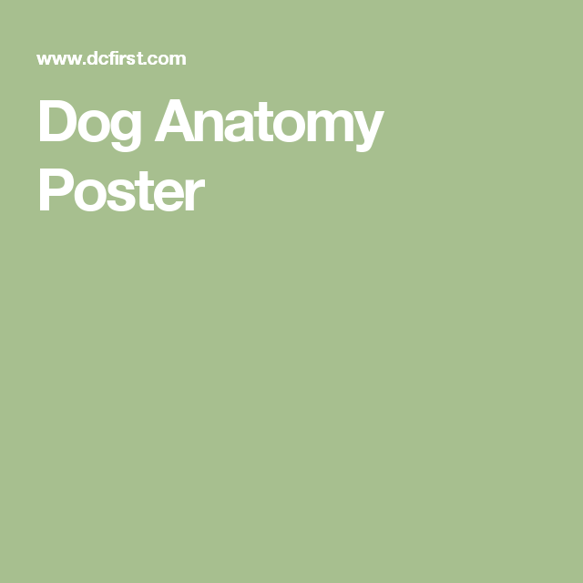 Dog Anatomy Poster 18 X 24 Anatomy Of A Labrador Pinterest