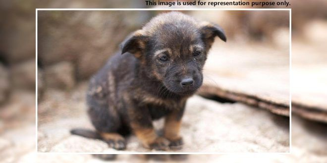 A Stray Puppy Killed By A Man In Panchkula Dog News Stories